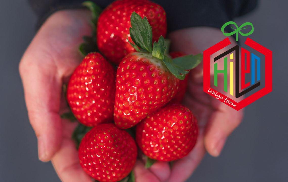 「イチゴ」販売開始♪